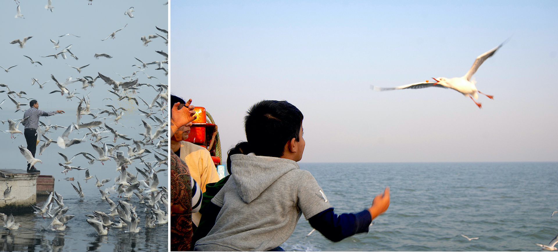 Seagulls are observant birds that do not pass up an opportunity for free meals as seen in these images from the Yamuna river in New Delhi (left) and a ferry on the Mumbai-Alibaug route (right). Photos: Naveen Macro/Shutterstock (left), Mayank Soni (right)