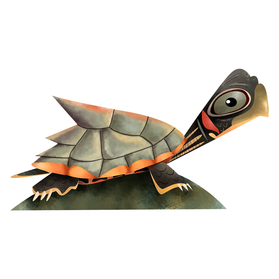 Assam roofed turtle