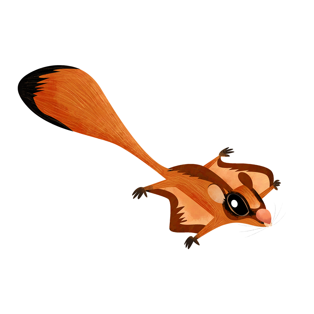 Red giant gliding squirrel