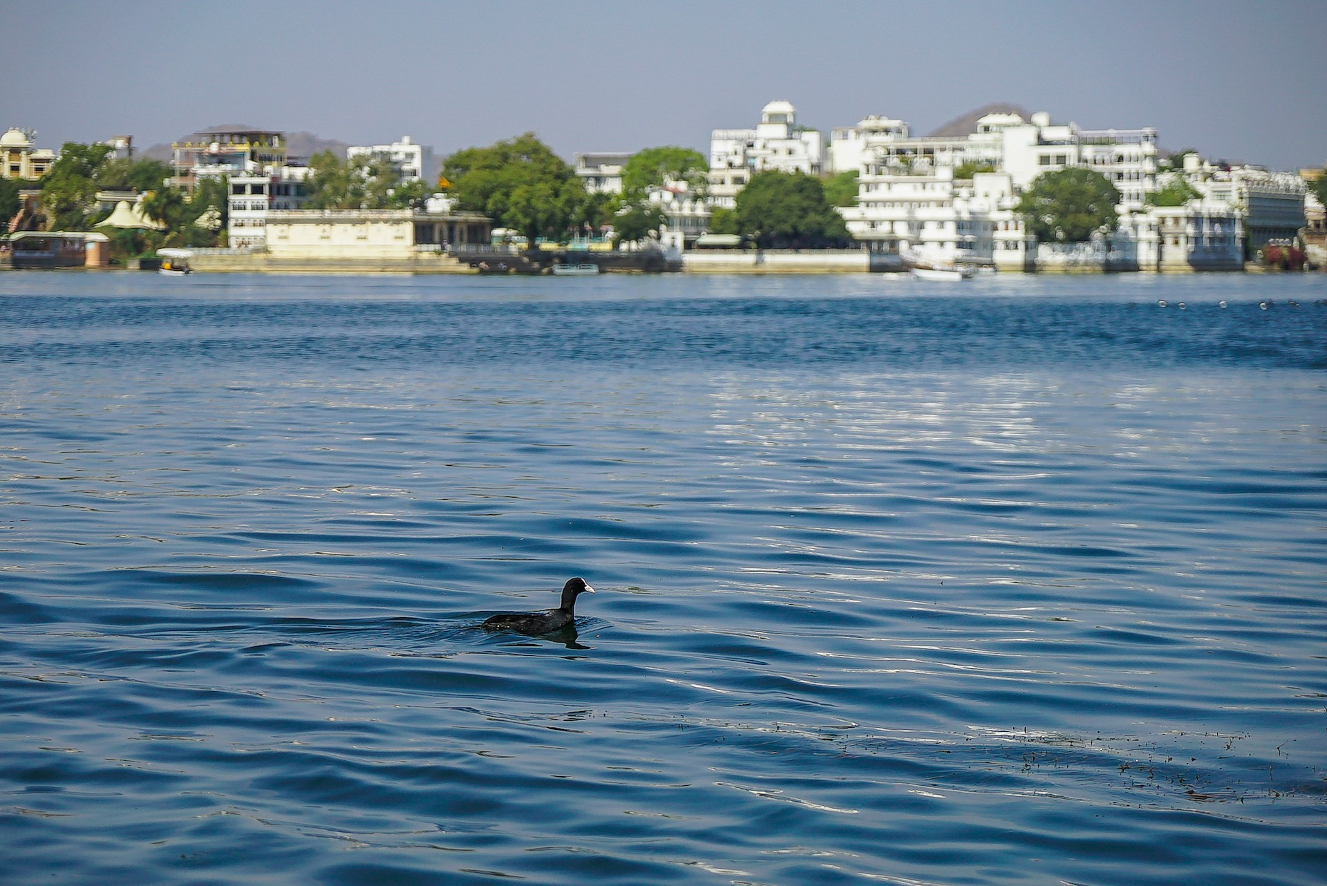 City of Lakes at Risk: Why Udaipur's Wetlands Need Your Attention