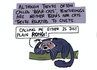 Get Your Facts Right on the Binturong