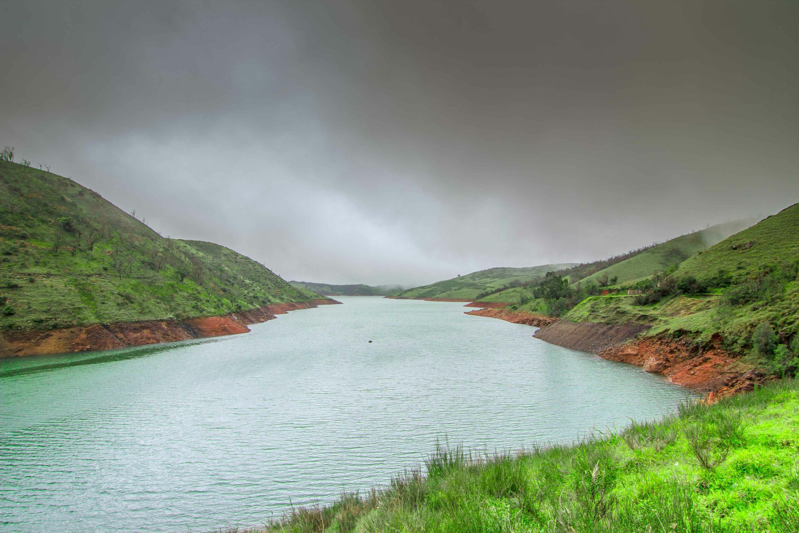 Troubled Waters: Alien Plants and Water Stress in the Nilgiris